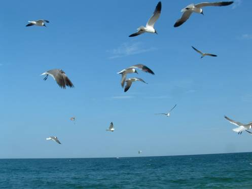 122 gull (1)