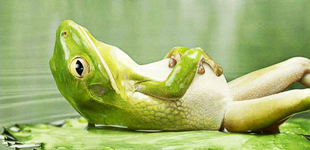 frog-relax (1)