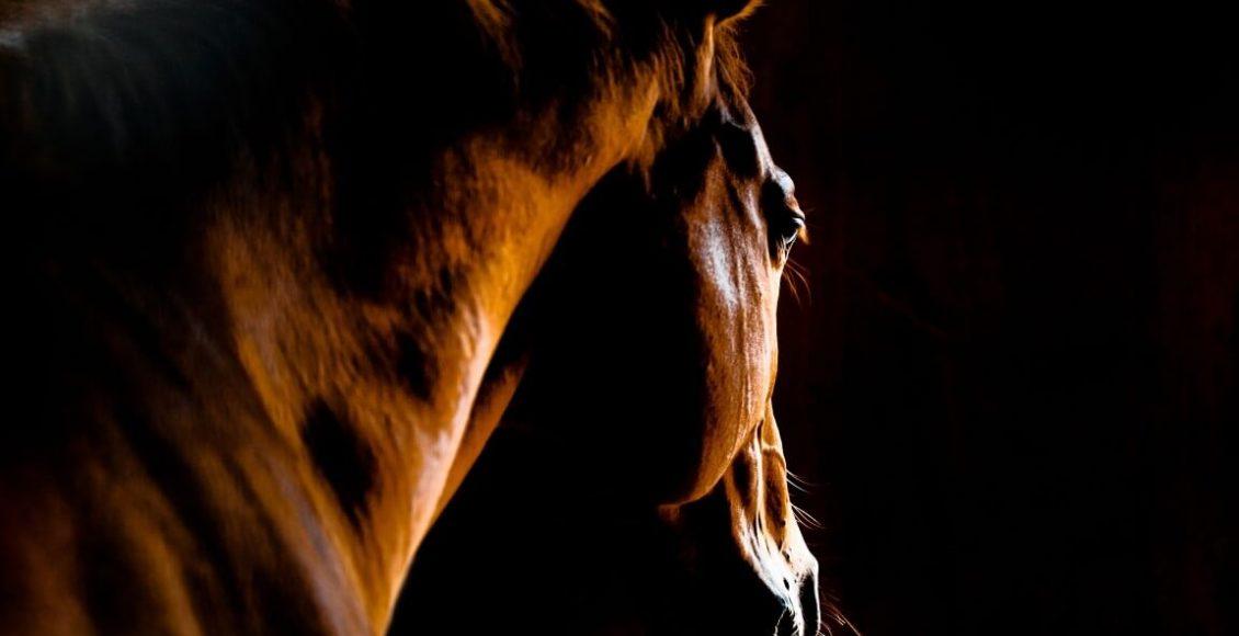 horse-dreams (1)
